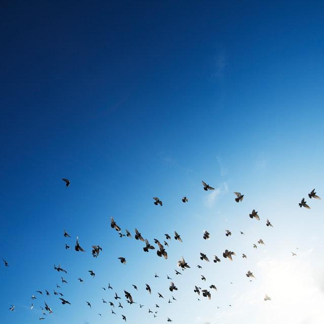 Broumovské kostely z ptačí perspektivy